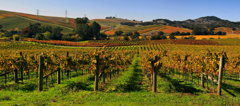 World's Top Luxury Vineyard Accommodations